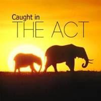 Caught In The Act - Những khoảng khắc thiên nhiên hoang dã