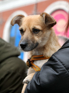 Una campaña de adopción de mascotas en los grandes centros de ocio familiar