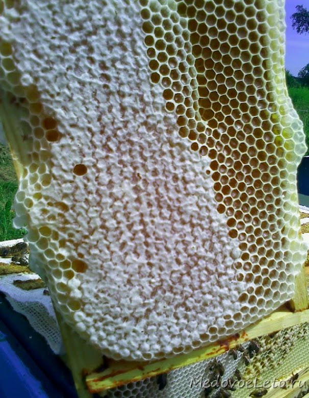 Майский мёд в сотах.