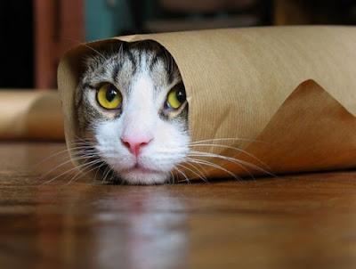 Resultado de imagem para gato lindinho