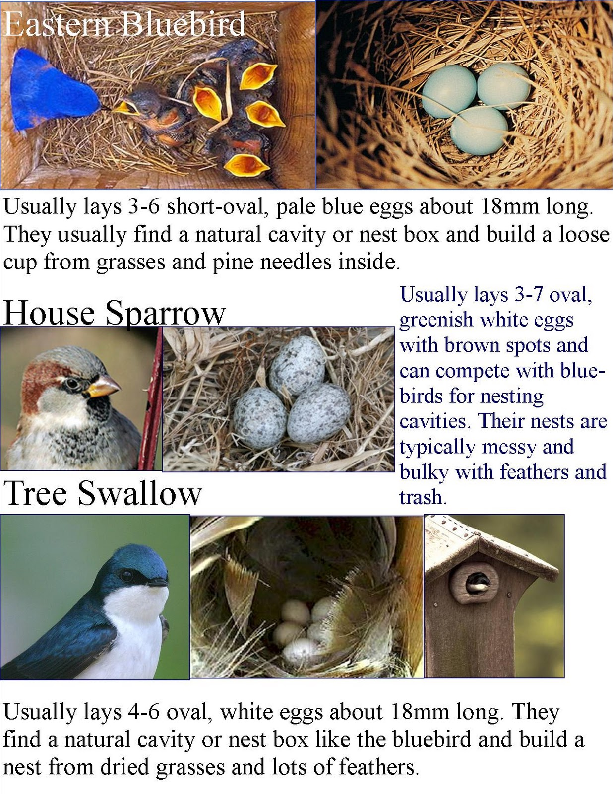 Common Backyard Birds wild birds unlimited: common backyard bird nest identification