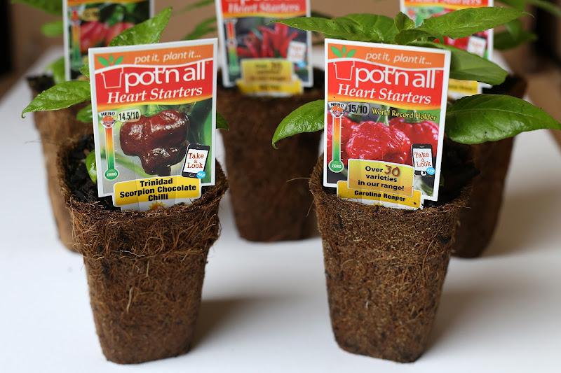 Pot'n All Pty Ltd - Google+