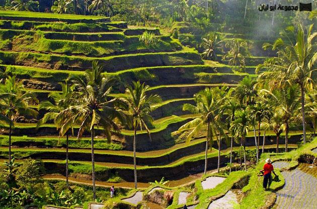 أندونيسيا بلد الجمال الخلاب  Bali_Island_17