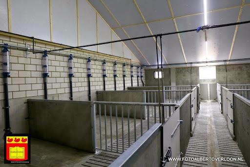 Open dag varkensbedrijf molenpas overloon 29-06-2013 (6).JPG