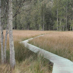 Great North Walk boardwalk (71464)