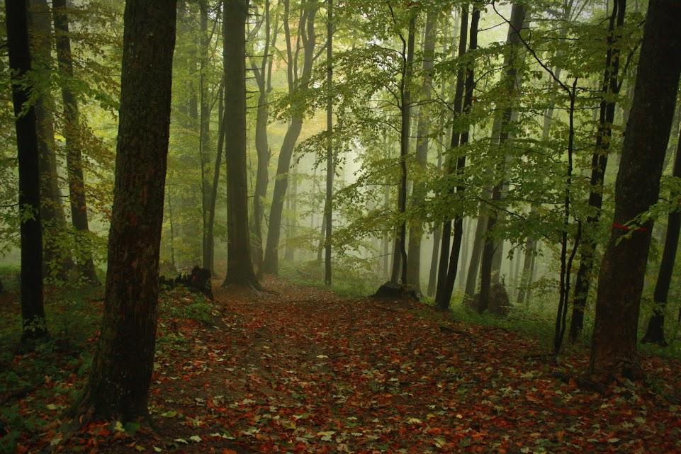 Szlak Cisna - Małe Jasło
