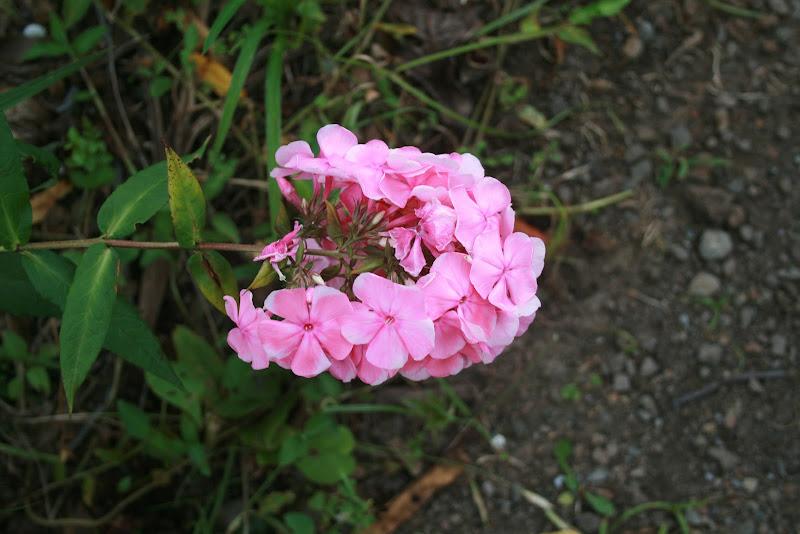 Futur jardin d'orchidées!!! IMG_3518