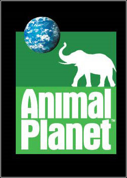 45454 Download   Animal Planet: A Procura da Naja Real    TVRip   Dublado