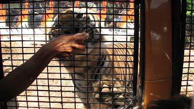 Zoobic Safari Subic Bay Zambales [March 2009] 9