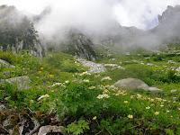 花園(チングルマ)