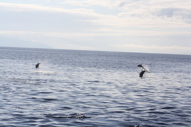 Esses magnificos Cetacios -  Cachalotes - Golfinhos etc IMG_1397