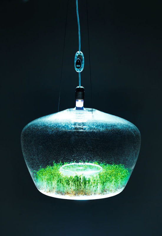 The Glasshouse Lamp by Kristýna Pojerová
