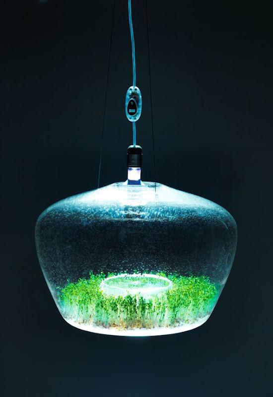 The Glasshouse Lamp by Kristýna Pojerová