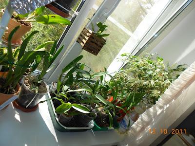 Размещение орхидей - Страница 5 DSCN1071