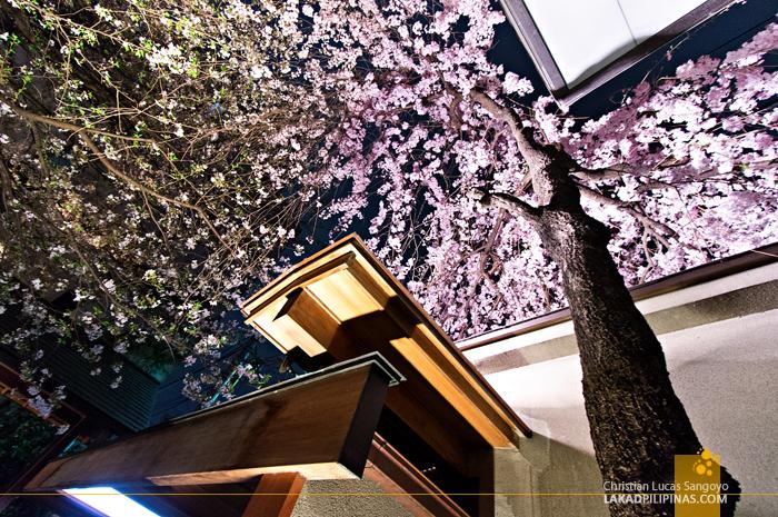 Sakura Greetings at Sakura Jaya in Tokyo