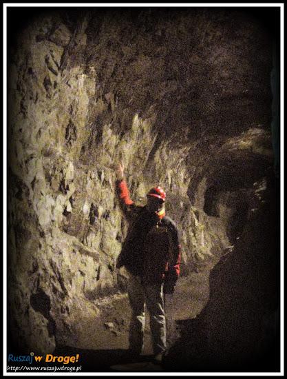 osówka głuszyca - wysokie tunele