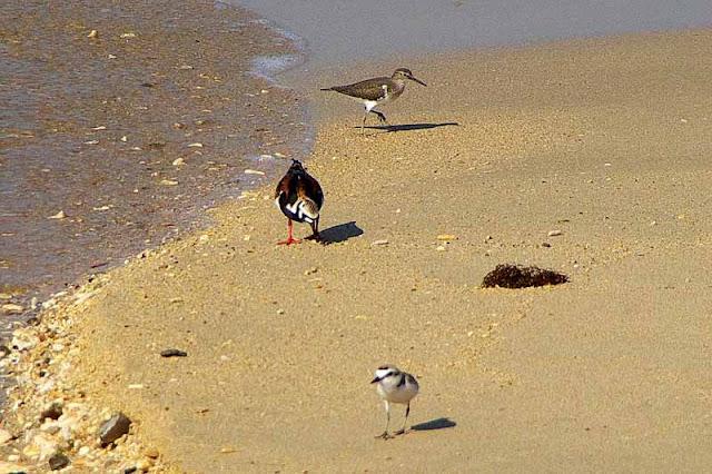birds,migratory,okinawa,Japan