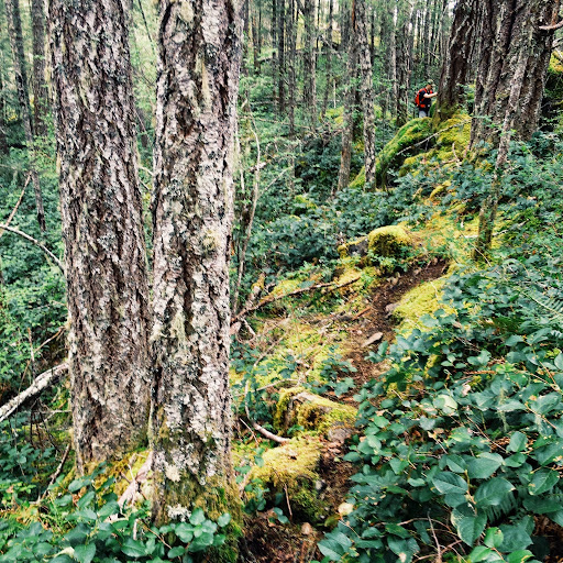 Through the woods. To Peden Lake and Beyond: A Photoadventure
