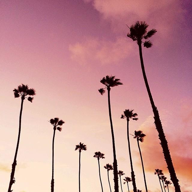INSPIRATION: Palm Trees