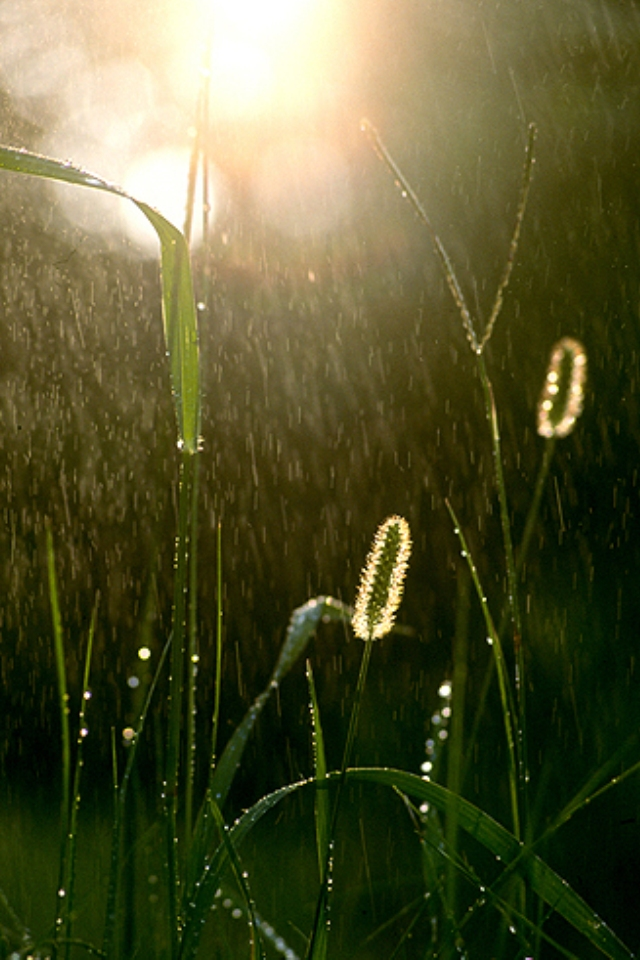 Rain on Green Grass Nature Wallpapers For iPhone4S