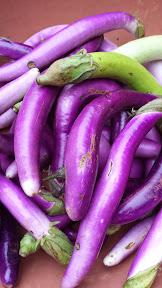 Portland Farmers Market at PSU, Japanese Eggplants
