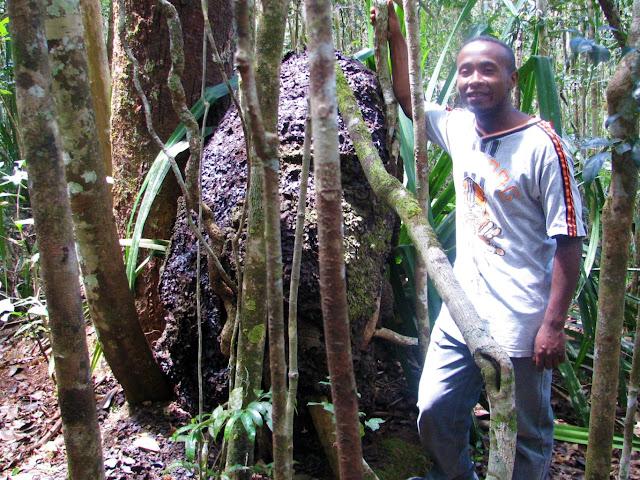 صور من مدغشقر Madagascar 14687273106