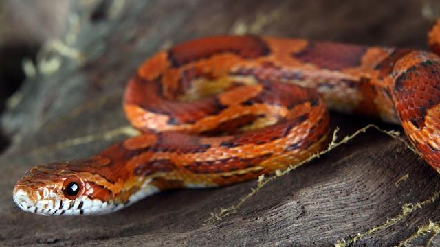 """Lời răn dạy từ loài rắn:'' Hãy biến những yếu điểm của bạn thành lợi thế riêng"""""""