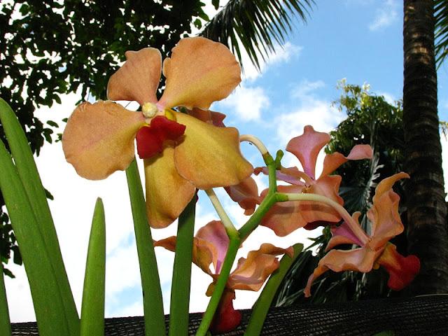 Из зимы в лето. Филиппины 2011 - Страница 7 IMG_0001%252520%25252813%252529