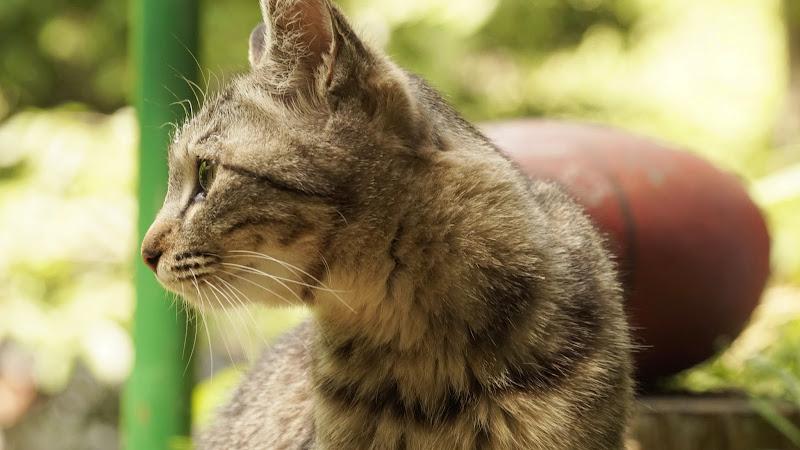 尾道 猫 写真