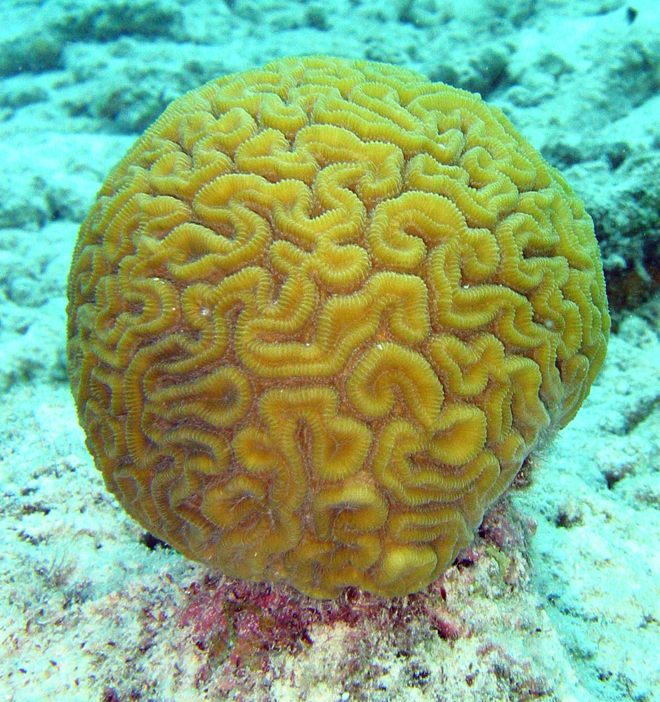 Design And Ideas: Coral Forms And Natural Shapes