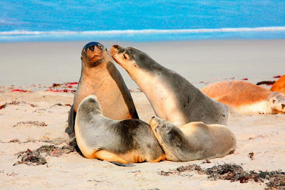 Foche rilassate sulla spiaggia