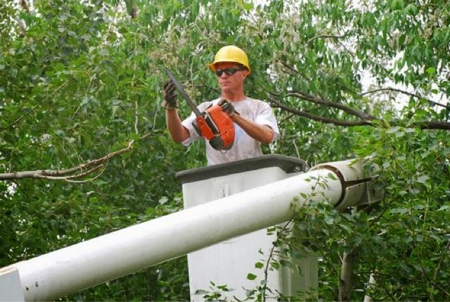 Burford tree service florida