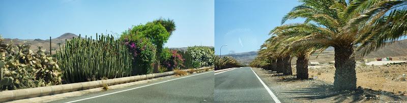 Pflanzen neben einer Straße auf dem Süden der Insel.