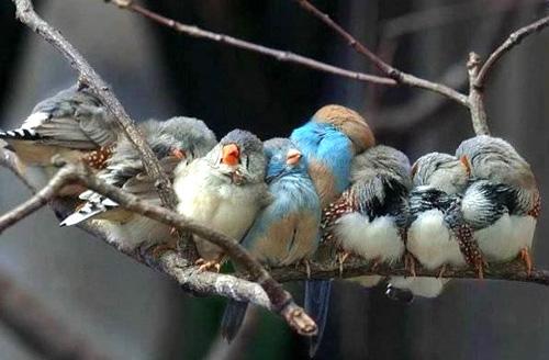 https://lh5.googleusercontent.com/-GNLekNeTgTE/TXVWtoZtMqI/AAAAAAAABlo/Dn_5PUp68WE/Cute_birds-cropped.jpg