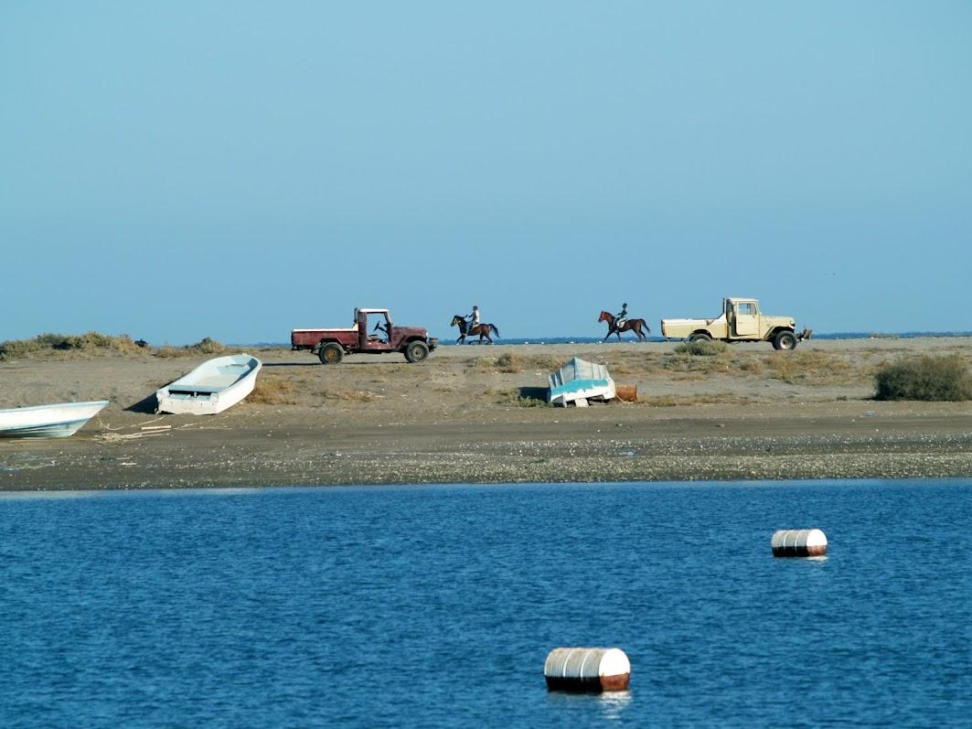 Horses along Khor Kalba beach
