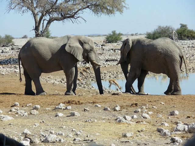 أفضل ما في أفريقيا  Best of Africa Namibia_180807143442
