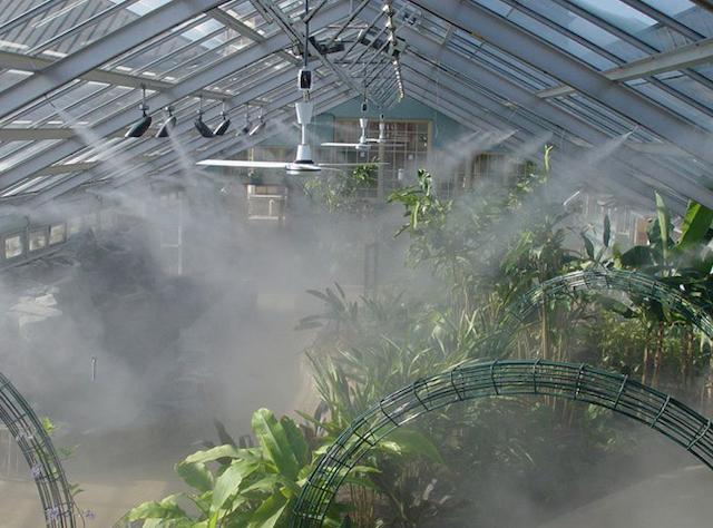 Các thông tin hay về máy phun sương tưới lan
