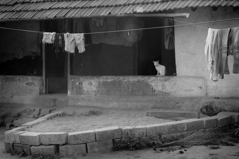 34_kakkabe_morning_walk_cat