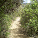 thick heath surrounding track (11201)