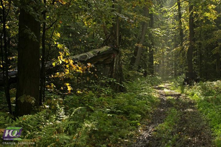 Лес на гонке - Золотая осень