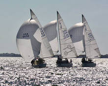 J/24 one-design sailboats- sailing in formation downwind on Tampa Bay