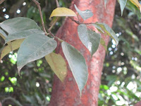 https://lh5.googleusercontent.com/-GikgAZL5pEc/T3wGzY6jNAI/AAAAAAAAAQ0/PTUiEgBSzkM/s1600/ZZ+Unknown+085+Tree+-+0000.jpg
