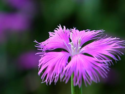 Special_flower.jpg