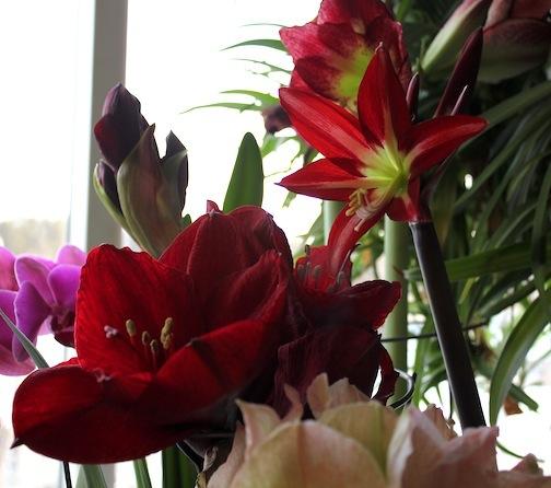 IMG_6317-2012-02-28-20-24.jpg