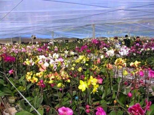 den tham vuon hoa nhiet doi moc chau%2B%284%29 Đến thăm vườn hoa nhiệt đới Mộc Châu