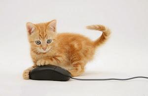 Bạn có biết tại sao chuột máy tính gọi là ... chuột
