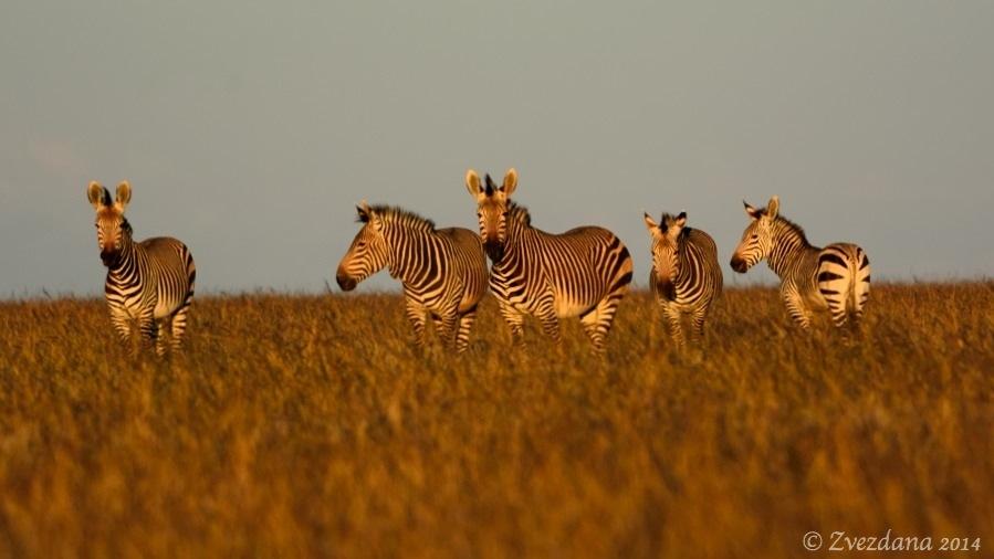 Namibia+2014_068.JPG