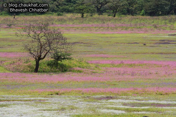 Trees on flower beds at Kas Plateau