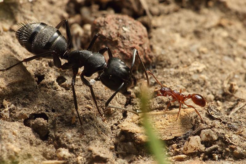antstore world of ants thema anzeigen ameisen im garten. Black Bedroom Furniture Sets. Home Design Ideas