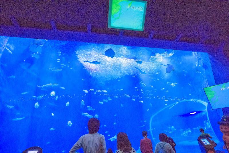 アクアワールド大洗水族館 写真4